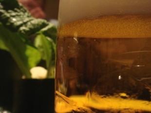 en beer