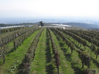 tominooka winery