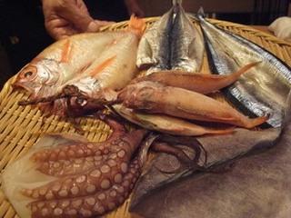 ichibi fish
