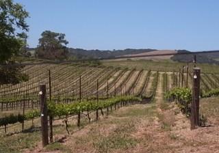 PASO ROBLES vineyard