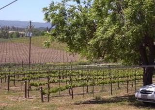 windward vinyard